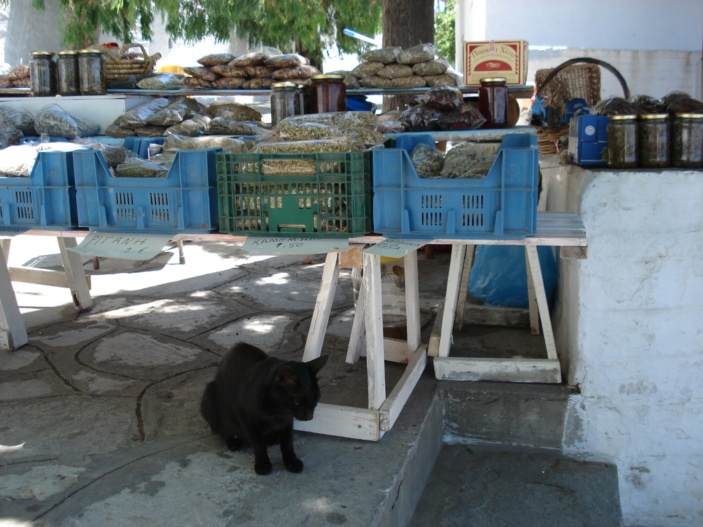 tinos cat spices